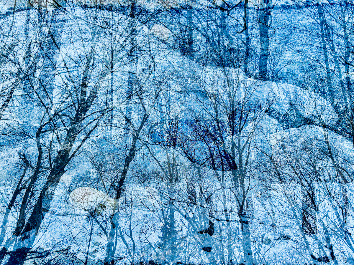 Trees with Snow, 2021