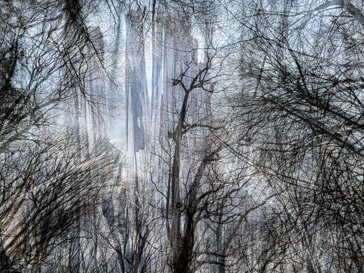 Abstract Trees, 2021