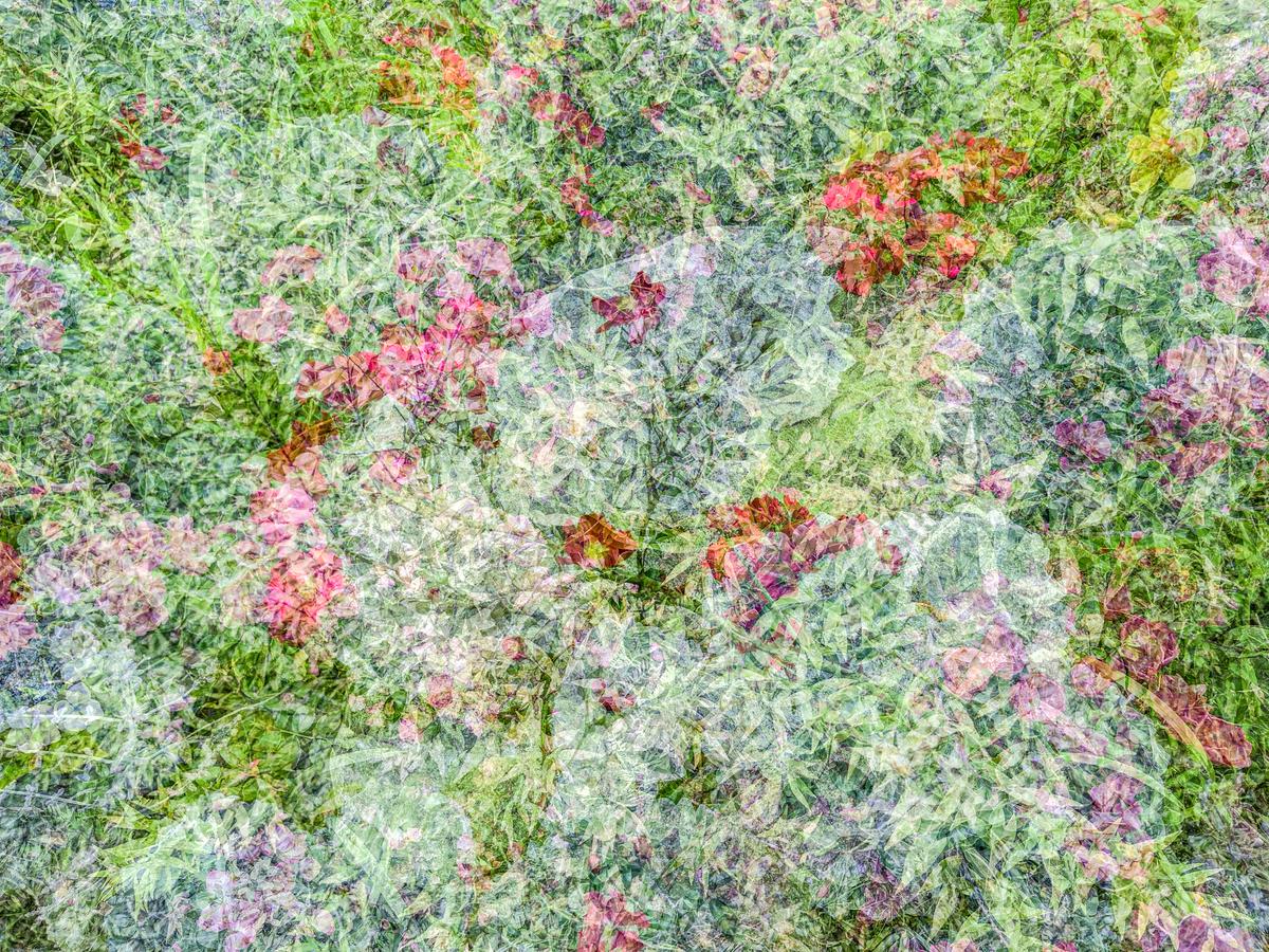Floral Mix, 2021
